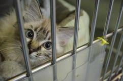 Un gattino di salvataggio guarda attraverso le barre della sua gabbia fotografia stock