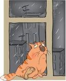 Un gattino nella pioggia in autunno. Fotografia Stock