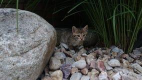 Un gattino selvaggio Fotografie Stock Libere da Diritti
