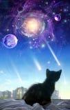 Un gattino su una finestra illustrazione di stock