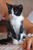 Un gattino sveglio fotografia stock libera da diritti