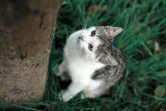 Un gattino sveglio Immagini Stock Libere da Diritti