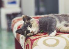 Un gattino sveglio che dorme su un sofà rosso Immagini Stock