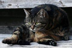 Un gatto è molto mobile con la pelliccia-cura fotografia stock libera da diritti
