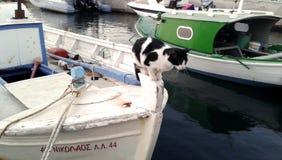 Un gatto è saltare di una barca Immagini Stock
