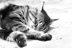 Un gatto è trovarsi addormentata Immagine Stock Libera da Diritti