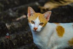 Un gatto Immagini Stock Libere da Diritti