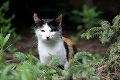 Un gatto Fotografia Stock