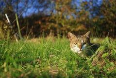 Un gatto Immagini Stock