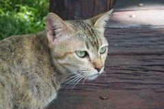 Un gatto Fotografie Stock