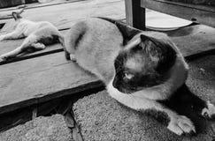 Un gatto Fotografie Stock Libere da Diritti