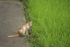 Un gatto accanto al campo verde fotografia stock libera da diritti