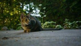 Un gatto adorabile Fotografia Stock
