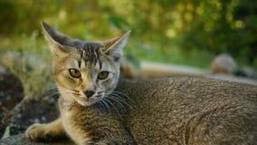 Un gatto adorabile Fotografie Stock