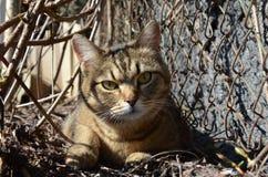 Un gatto all'aperto di mattina fa il giardinaggio Immagine Stock