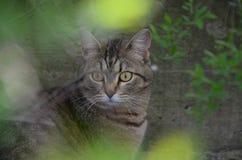 Un gatto all'aperto di mattina fa il giardinaggio Fotografie Stock Libere da Diritti