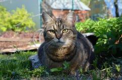 Un gatto all'aperto di mattina fa il giardinaggio Immagini Stock