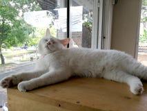 Un gatto bianco che dorme su una tavola con un vetro comodo fotografia stock