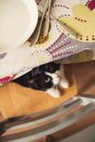 Un gatto in bianco e nero che si nasconde sotto la tavola immagine stock libera da diritti