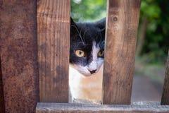 Un gatto bianco e nero fotografato tramite un recinto immagine stock libera da diritti