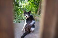 Un gatto bianco e nero fotografato tramite un recinto di legno immagine stock libera da diritti