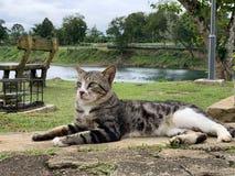 Un gatto casuale della via fotografie stock libere da diritti