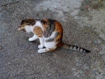 Un gatto che gioca con una lucertola Fotografia Stock Libera da Diritti