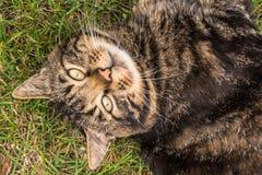Un gatto che riposa sull'erba fotografia stock