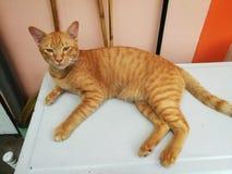 un gatto che si siede su una tavola Immagini Stock Libere da Diritti