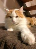 Un gatto che si trova su una coperta Immagini Stock Libere da Diritti