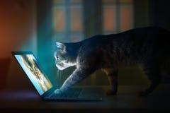 Un gatto con il computer portatile Fotografia Stock