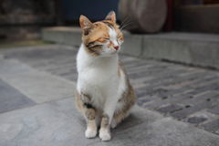Un gatto con il suo osserva chiuso Fotografie Stock