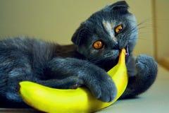 Un gatto con la banana Fotografia Stock