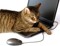 Un gatto con un computer portatile Fotografia Stock