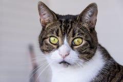 Un gatto curioso Fotografie Stock