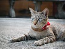Un gatto del gattino che guarda diritto Fotografia Stock Libera da Diritti