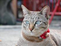 Un gatto del gattino che guarda diritto Immagini Stock