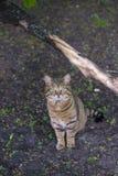 Un gatto della via Fotografia Stock Libera da Diritti