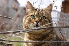 Un gatto di caccia Fotografia Stock Libera da Diritti