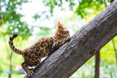 Un gatto di marmo Immagini Stock