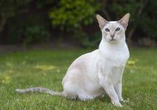 Un gatto di posa fotografia stock libera da diritti