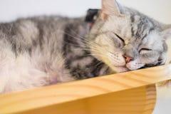 Un gatto di sonno Immagini Stock