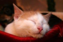 Un gatto di sonno Immagine Stock