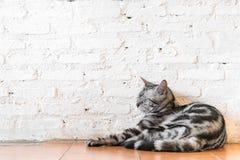 Un gatto di sonno Immagini Stock Libere da Diritti