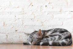 Un gatto di sonno Fotografie Stock Libere da Diritti