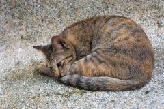 Un gatto di sonno Fotografie Stock