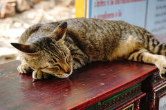 Un gatto di sonno su un bordo di legno Fotografia Stock Libera da Diritti