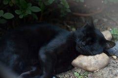 Un gatto domestico nero che dorme sulla roccia Immagine Stock Libera da Diritti
