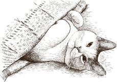 Un gatto domestico sta dormendo sotto una coperta Fotografie Stock