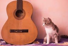 Un gatto e la chitarra Immagini Stock